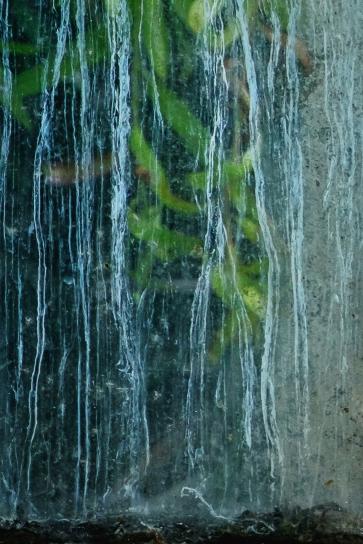 utercht botanische tuin-20170501-34-Edit-9